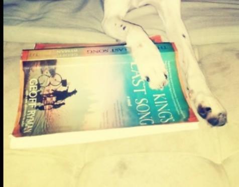 Foto de Maíra Nardo T. de Campos Sua cachorrinha quer compartilhar o livro