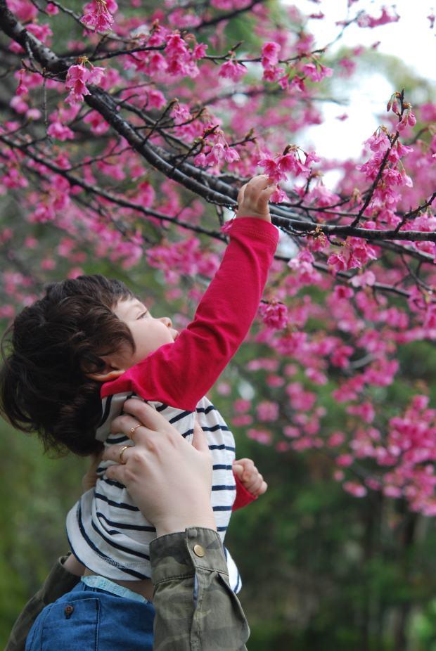 Alguém também adorou as cerejeiras! Foto por Cristiano Cittadino Oliveira
